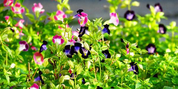 Der Heller Garten in Gardone Riviera