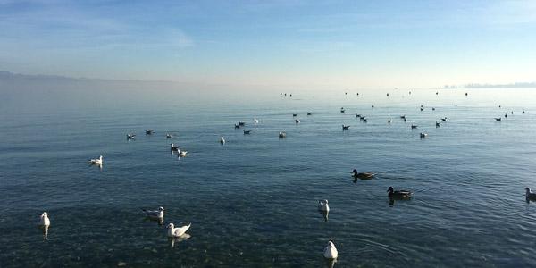 Das milde Klima des Gardasees